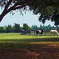At The Ranch by Rhonda Lee