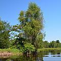 Atchafalaya Basin 39 by Maggy Marsh