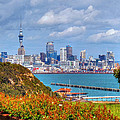 Auckland by Lynette McNees