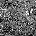 Audubon Park 2 Monochrome by Steve Harrington