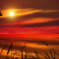 August Sunset by Tom York Images
