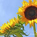 August Sunshine by Traci Cottingham