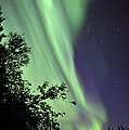 Aurora Borealis Above The Trees by Jiri Hermann