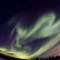 Aurora Goose by Maik Tondeur