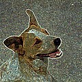 Australian Cattle Dog Mix by One Rude Dawg Orcutt