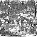 Australian Gold Rush, 1851 by Granger