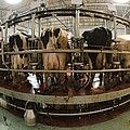 Automatic Milking Machine by Photostock-israel