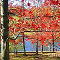 Autum Colors by Sherry Dulaney