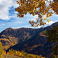 Autumn Above Aspen by Jim Garrison