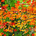 Autumn Abstract Painterly by Andee Design