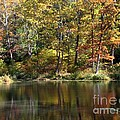 Autumn Ambience by Living Color Photography Lorraine Lynch