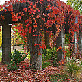 Autumn Arbor In Grants Pass Park by Mick Anderson