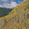 Autumn Aspens San Juan Mountains by Dean Pennala