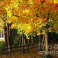 Autumn At Bayberry Cottage  by Nancy Patterson