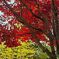 Autumn Beauty by Barbara  White