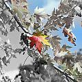 Autumn Beauty by Michael Frank Jr