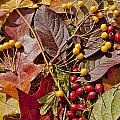 Autumn Berries And Leaves Background  by Aleksandr Volkov