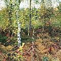 Autumn Birchh Forest by Ulrich Kunst And Bettina Scheidulin