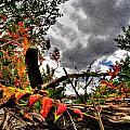 Autumn Breeze Through The Trees    Alt by Michael Frank Jr