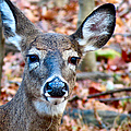 Autumn Buck by Art Dingo