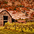 Autumn Cabernet by Debra and Dave Vanderlaan