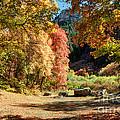 Autumn Campground In Blacksmith Fork Canyon - Utah by Gary Whitton