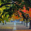 Autumn Canopy by Lisa Phillips