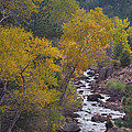 Autumn Canyon Colorado Scenic View by James BO  Insogna