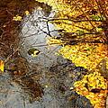 Autumn Collage by Kathy Bassett