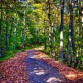 Adirondack Color 53 by David Patterson