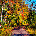 Adirondack Color 56 by David Patterson