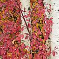 Autumn Color by Greg Vaughn