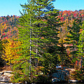 Adirondack Color P8 The White Bench by David Patterson