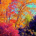 Autumn Colors 13 by Aron Chervin