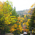 Autumn Colors 3990 by Charles  Ridgway