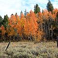 Autumn Colors by Athena Mckinzie
