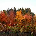 Autumn Colors In The Vineyard by Jeff Lowe