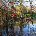 Autumn Colors On The Pond  by Nancy Patterson