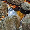 Autumn Colors Reflected In Pool Of Water by Jill Battaglia