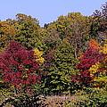 Autumn Colors by Rosanne Jordan