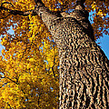 Autumn Colors by Terry Elniski