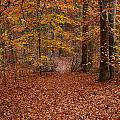 Autumn Creekside Trail by Faye E Davis