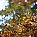 Autumn Crescendo by Mike Reid