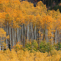 Autumn Curtain by Jim Garrison