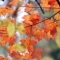 Autumn Day Dream by LeeAnn McLaneGoetz McLaneGoetzStudioLLCcom