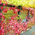 Autumn Decoration by Sergey and Svetlana Nassyrov