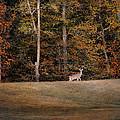 Autumn Deer by Jai Johnson