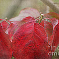 Autumn Dodwood Leaves by Debbie Portwood
