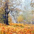 Autumn Dreams by Evgeni Dinev