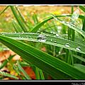 Autumn Drops by Debbie Portwood